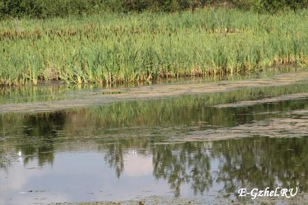 Озерцо-болотце