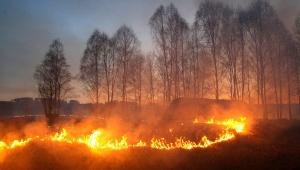 Природные пожары - травяные палы